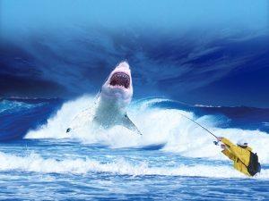 benarkah semua ikan hiu berbahaya?