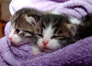 fakta hewan : alasan kucing mengeong, mendengkur, dan mendesis