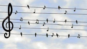 fakta hewan : burung layang-layang si jago terbang di angkasa