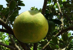 manfaat jus jeruk bali sebagai penurun berat badan