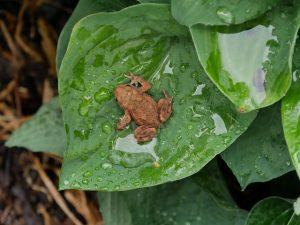 arti peribahasa seperti katak dalam tempurung