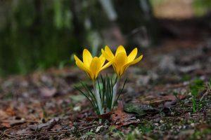 arti peribahasa berguru kepalang ajar bagai bunga kembang tak jadi