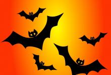 bats-151206_640
