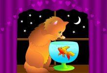 cat-2055791_640