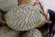 durian-2637551_640