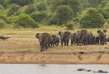 elephant-2811492_640