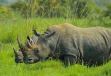 rhino-2878222_960_720