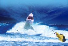 shark-2102330_640