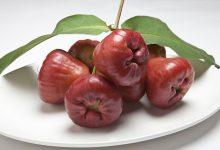 wax-apple-2439857_640